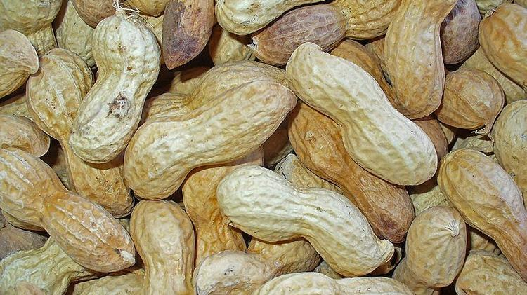 Xemerge has licensed technology from N.C. A&T that could make peanuts safer for millions of allergy sufferers.