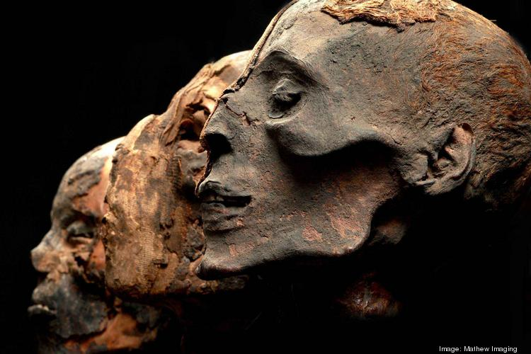 Mummies of the World coming to the Buffalo Museum of Science.