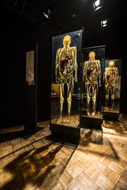 """Body Worlds & the Cycle of Life"" focuses on the human life cycle and the aging process."