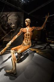 The exhibit has been praised for showing the complexity of the human body.
