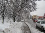 Freezing rain created havoc in the Philadelphia area on Feb. 5, creating widespread power outages, downed tree limbs and traffic woes. Pictured: Lancaster Avenue in Bryn Mawr, Pa.