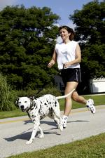 Now canines can race, too! Flying Pig adds dog run