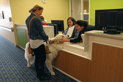 Katie Sandilands brings Rogan by the nurses' station at Randall Children's Hospital. Dogs not only reduce stress in patients, but also in nursing staff.
