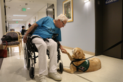 Chanel will hang out with any patient willing to give her a scratch under the chin in the waiting area of the Rehabilitation Institute of Oregon at Legacy Good Samaritan.