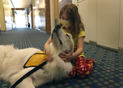 "Sophia Cardelli visits with Rogan, a 110-pound Great Pyrenees dog that melts into her lap at Randall Children's Hospital. Her dad, Tom Cardelli, said his 7-year-old daughter, who is being treated for asthma and viral pneumonia, misses her black lab DJ. ""She loves dogs,"" he said."