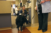 Charm puts on the charm for Nikki Elsensohn, a nursing assistant at Providence St. Vincent. Owner Rosemary Mayers had a list of patient rooms to visit with the English shepherd, who loves to play frisbee and catch tennis balls when she's not bringing joy to hospital patients and staff.