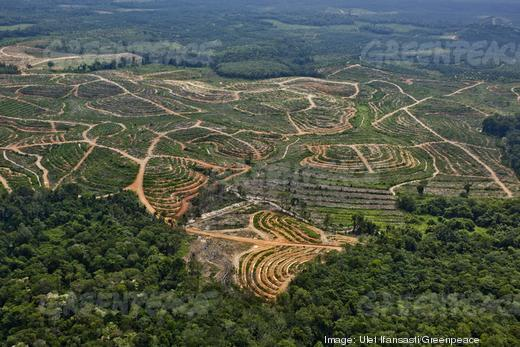 Greenpeace claims that palm oil used in P&G brands such as Head & Shoulders shampoo, Gillette shaving gel and Olay skin care products is connected to the deforestation of an area of Indonesia that is home to endangered Sumatran orangutans and tigers.