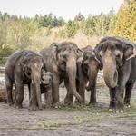 Oregon Zoo director out after four years