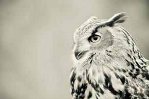 Be a wise owl and share your advice with Upstart.