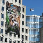 P&G launches de-forestation effort linked to Greenpeace protest