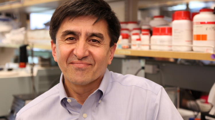 Dr. Shoukhrat Mitalipov, a senior genetic scientist at Oregon Health & Science University, and his team are close to finding rejection-proof human embryonic cells for regenerative therapies.
