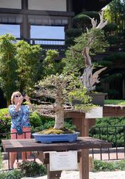 A display of bonsai trees in the Japan pavilion. Some are more than 80 years old.