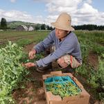 Chautauqua County tapped for farm/food initiative