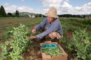 Mercy Corps Northwest's Refuge Gardens program provides recent refugees with land, supplies, and markets they need to improve their livelihoods through small-scale farming enterprise. It currently works with refugees from Burma and Bhutan.