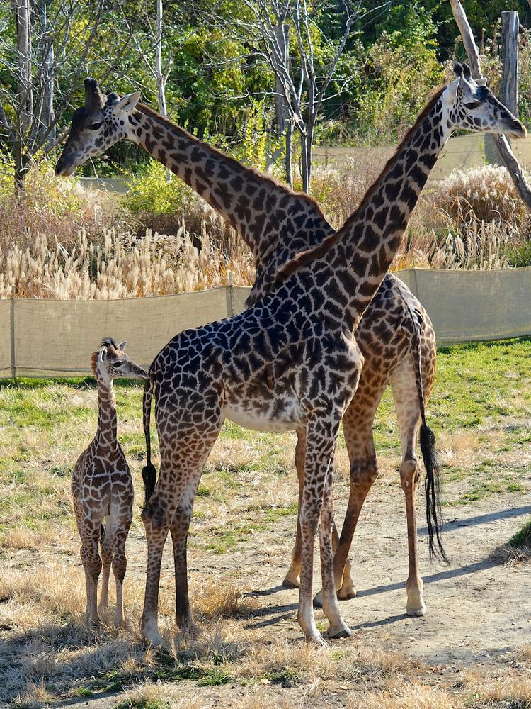 The Cincinnati Zoo will use $2 million of the $3 million it will receive from the state of Ohio for its Africa exhibit.