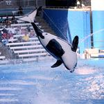 SeaWorld faces lawsuit alleging it deceived customers about orca treatment