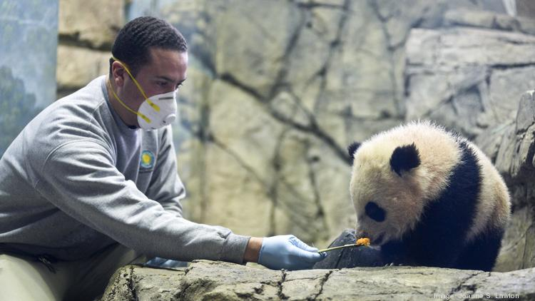 "My father texted me while they were at the National Zoo. I replied with the following message to pass along to my kids: ""Be sure and yell 'OVERRATED!' at the giant pandas for me."""