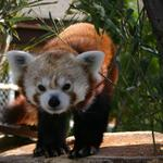 Anonymous donor gives $1M to Zoo New England