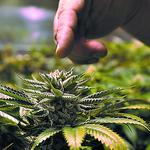 Medical marijuana bill dies as session comes to a close