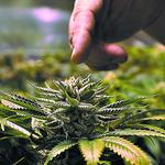 Five ways to capitalize on medical marijuana