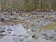 Crews of rescue workers, including search teams, including Washington National Guard members pictured here, slog through muck, as much as 20 feet deep and greater in some places, to look for victims of the Oso mudslide. Rescue workers, volunteers and family and friends of victims also have joined in the effort.