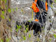 A cadaver dog and handler work the debris field near Oso on Thursday.
