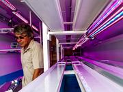 A-Pod Prinicpal Creator Paul Nicholson prepares for the One Spark Festival.  The pod which is built from a repuprosed shipping container serves as a aquaponic farm bredding fish and plants running on solar power.