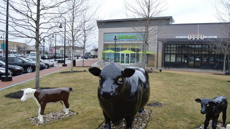 Three former Hilltop cows are now living in Lynnfield.