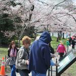 Another record: <strong>D.C</strong>. greeted more tourists yet again in 2013
