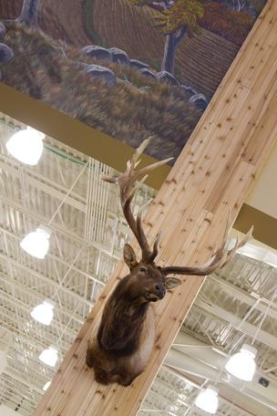 Taxidermy is on display throughout the new Cabela's opening at Polaris next month.