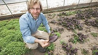 Dan Roelofs grows several varieties of greens year-round using the heat of the ground to maintain the temperature in his greenhouse in East Aurora. In 2009, he reintroduced a community-supported agriculture arrangement at Arden Farms and could hit 150 shareholders this year.
