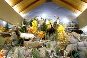 Each Cabela's has a unique 'mountain' featuring wildlife from the region surrounding the store.