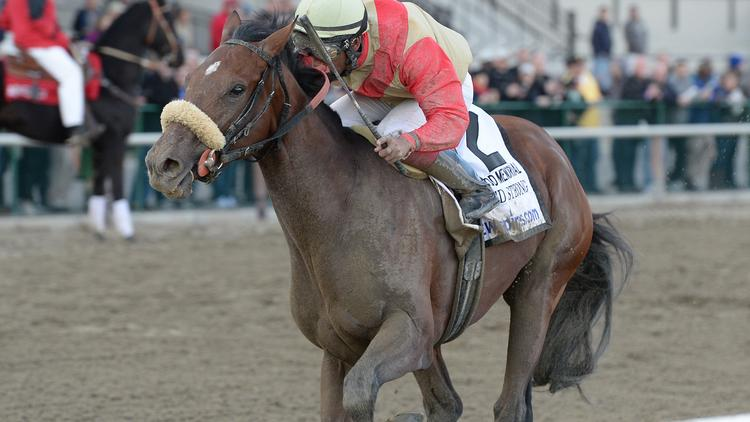 Wicked Strong, with strong Seattle ownership, could upset California Chrome's Triple Crown try, and win the June 7 Belmont Stakes.