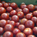 Heinz and Ford explore using tomatoes to build cars