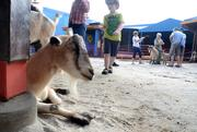 The Affection Section petting zoo saw its share of visitors.