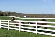 In addition to a training ground, Sagamore Farm also raises young horses poised to race in the future.