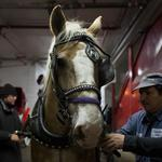 Mayor's office set to propose horse-carriage ban