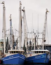 Shrimp boats docked in Port Canaveral