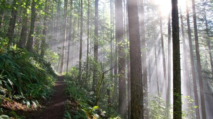Ecotrust Forest Management, a for-profit spinoff of Portland's Ecotrust, has registered its Moss Creekproject on the Oregon Coast with the Verified Carbon Standard. General Motors has purchased and retired the first five years of carbon credits for the project, estimated at 150,000 tons over its lifetime.