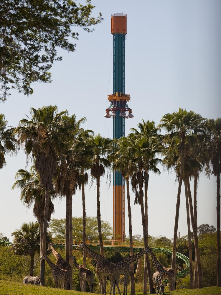 Falcon's Fury, the new thrill ride at Busch Gardens Tampa.