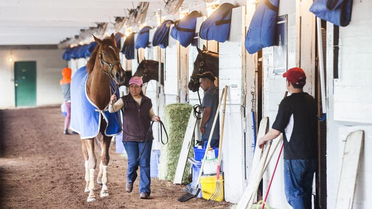 A horse is lead to its stall on Tuesday morning.
