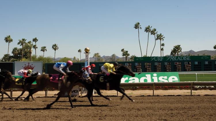 Attendance is up at Turf Paradise this year.