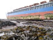 The M/V Danio grounded on one of the Farne Islands. It took about two weeks for the Titan crew to refloat the ship.