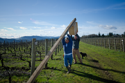 """Gaston-based Patton Valley Vineyard uses low-impact winemaking techniques built around sustainable farming and winemaking practices. It uses no herbicides, mechanically cultivates its weeds (which the company said enhances biodiversity and promotes the proliferation of natural systems for controlling pests) and treats its vines with organic compost from stems and grape skins culled via past fermentations. It also nurtures an array of wildlife, including birds and honeybees, and uses biodiesel tractor fuel. As far as packaging, Patton Valley bottles its wine in lightweight """"eco-glass"""" bottles that require less fuel to transport."""