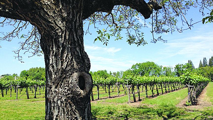 California wine sales surge in 2014 - San Francisco Business Times