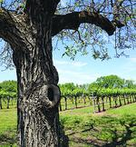 Noted wine regions, including Napa and Sonoma, protest new .wine Internet domain names