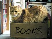 Schmoo, one of the Twice Sold Tales bookstore cats.