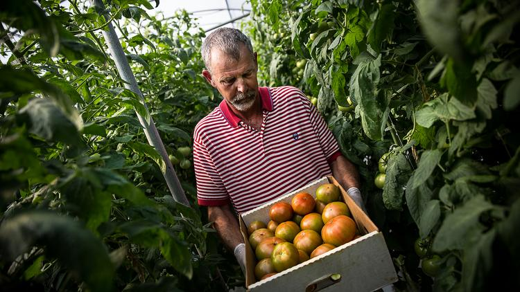 Refreshed business model of moving produce offers hope for many of state's struggling farmers like Tim Bass of Sunburst Tomato Co.