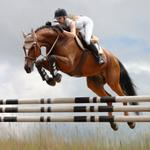 Can this group's international plans make the Jacksonville Equestrian Center profitable?