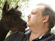 Dave D'Amato lives next door to Diamond Alpaca farm, located at 84845 Wolcott Rd. in Clarence.